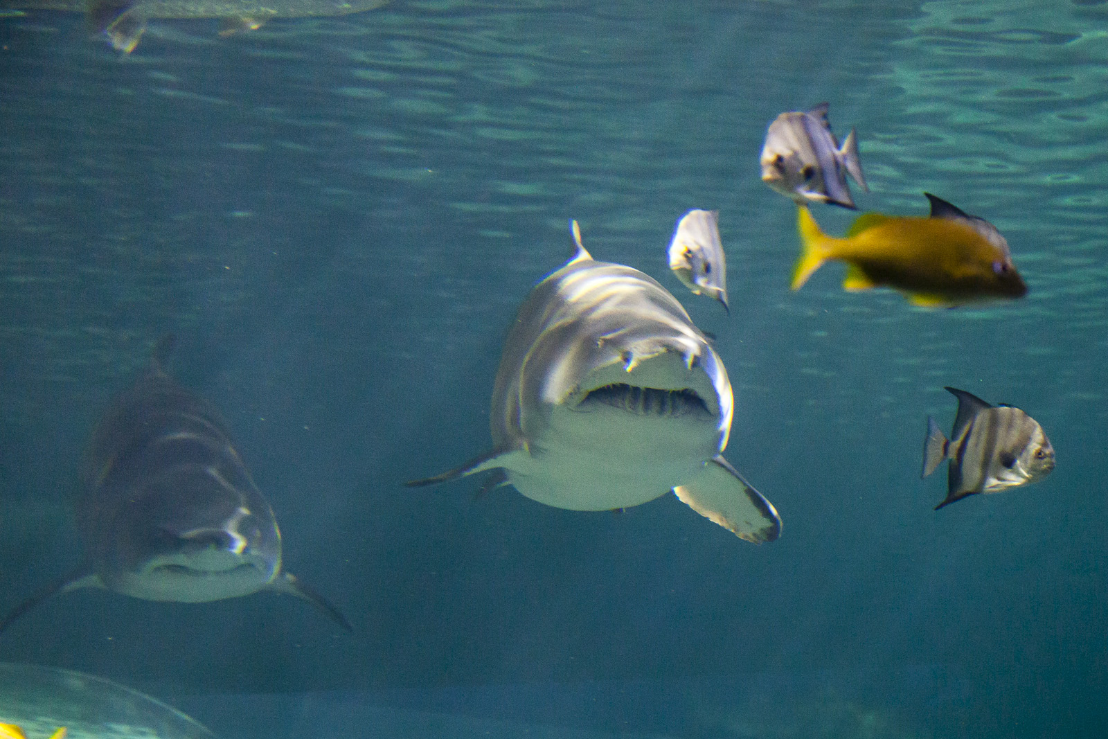 aquarium-016.jpg