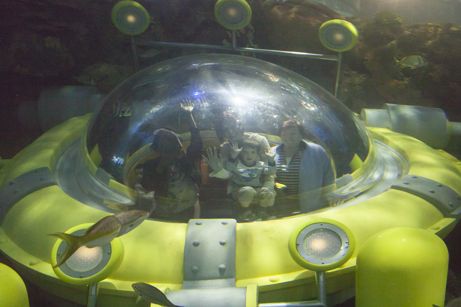 aquarium-019.jpg