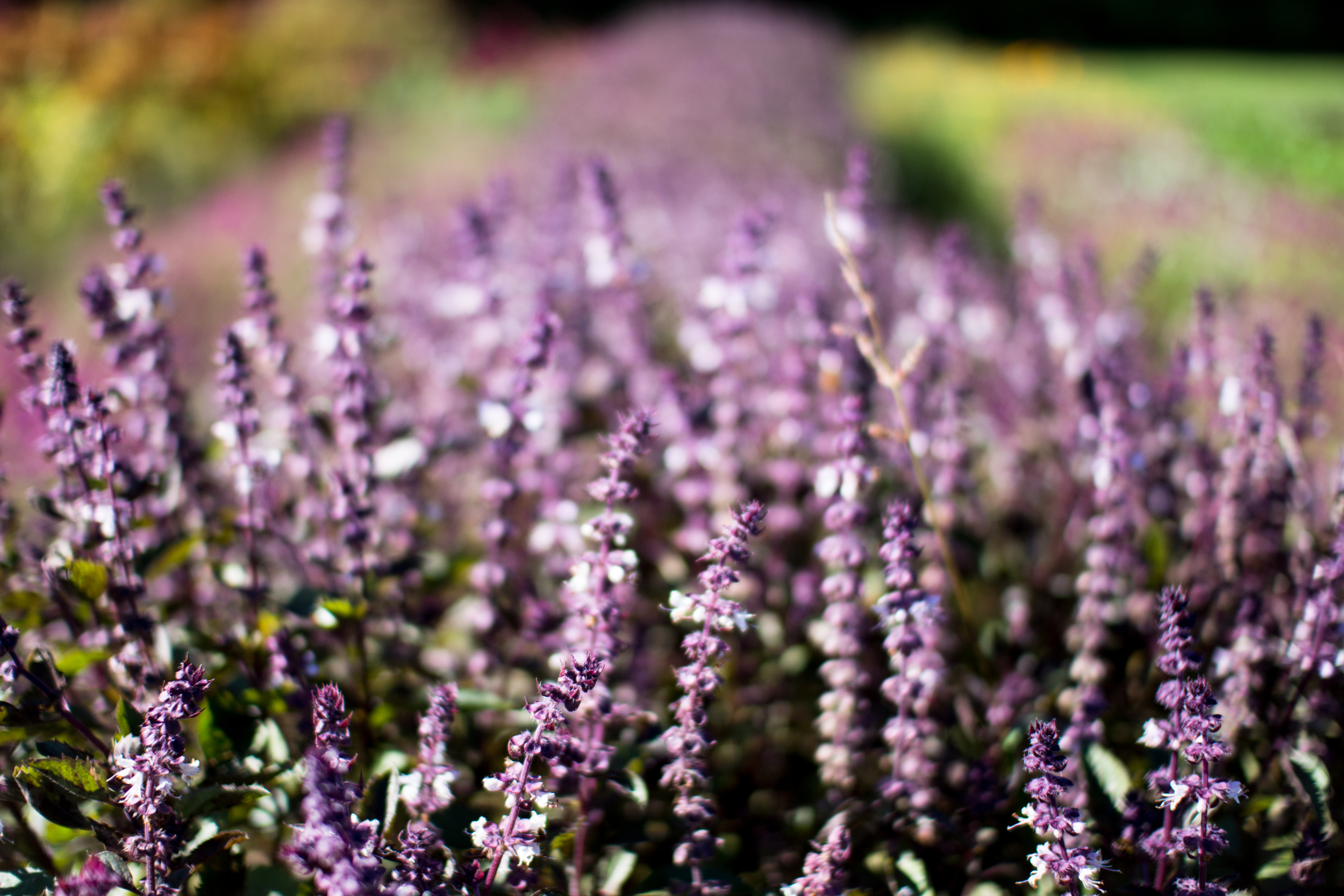 Field Floral Studio-19.jpg