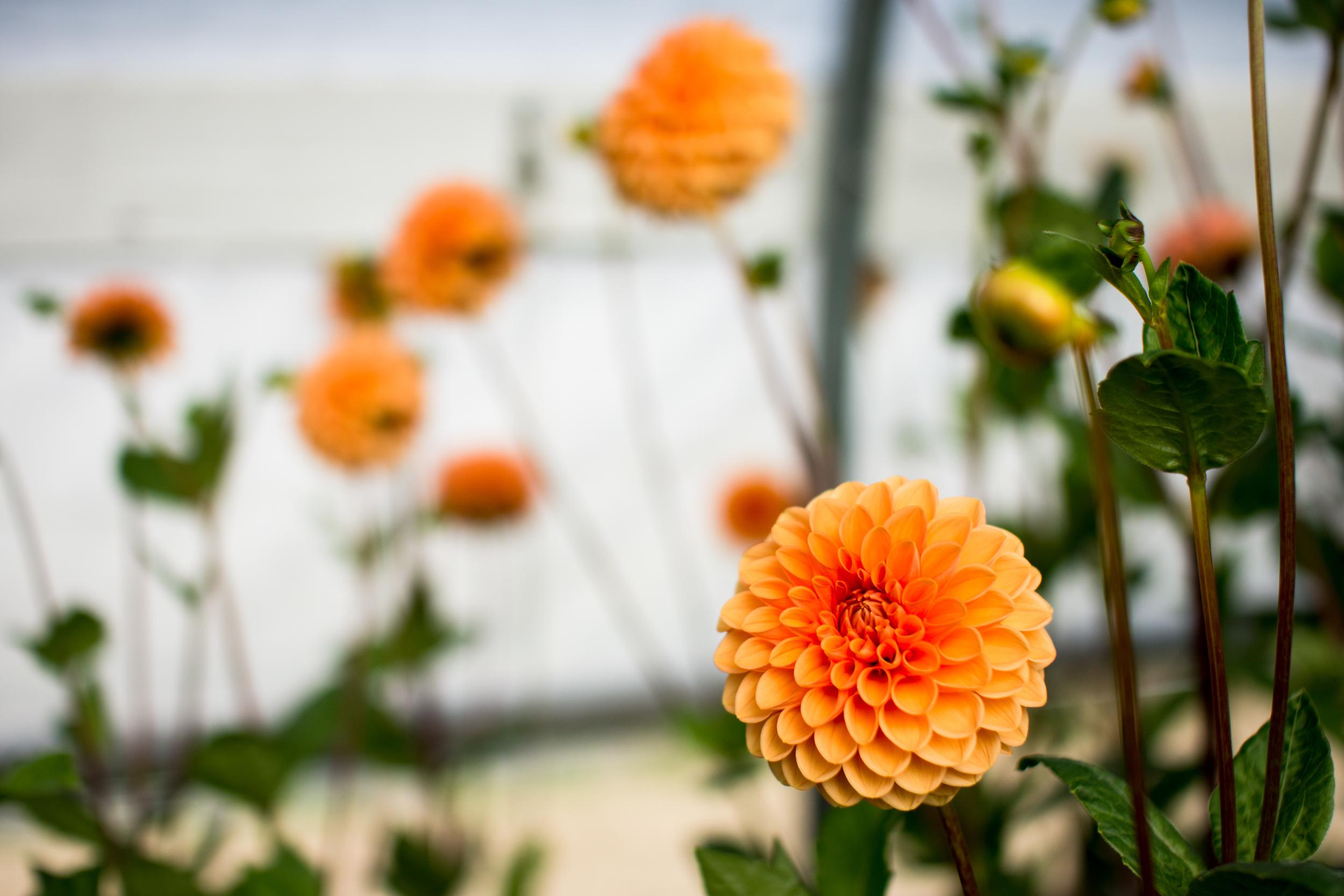 Field Floral Studio-10.jpg