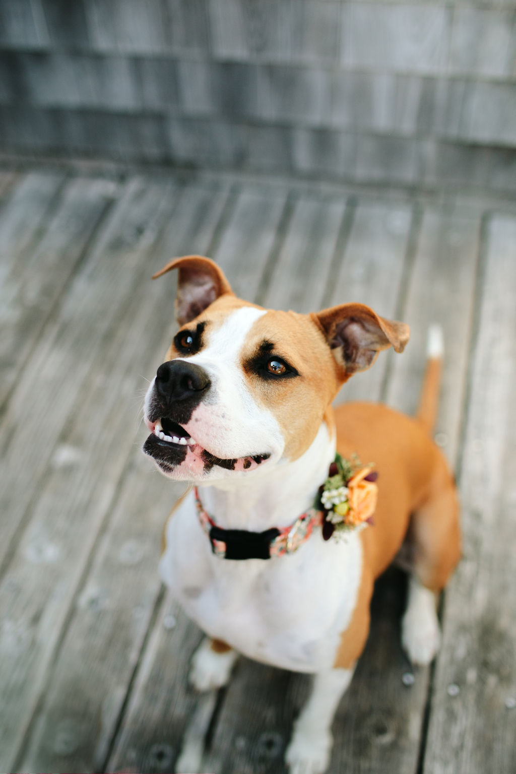 Ideas for including a dog in your wedding from an experienced wedding officiant. Photo by  Leslie Swan Photography
