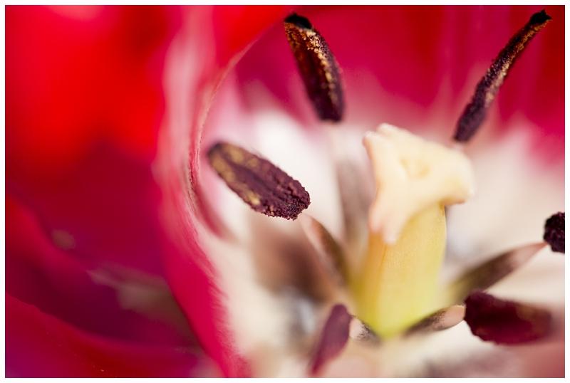 spring macro_0035.jpg