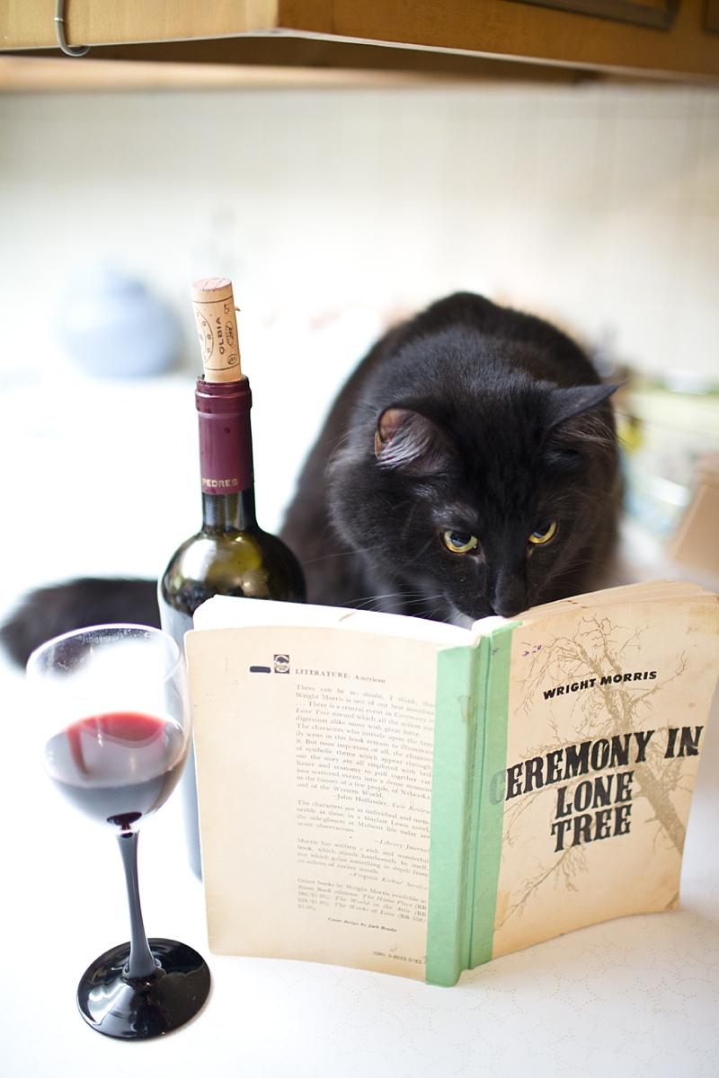 Cat drinking wine and reading.jpg