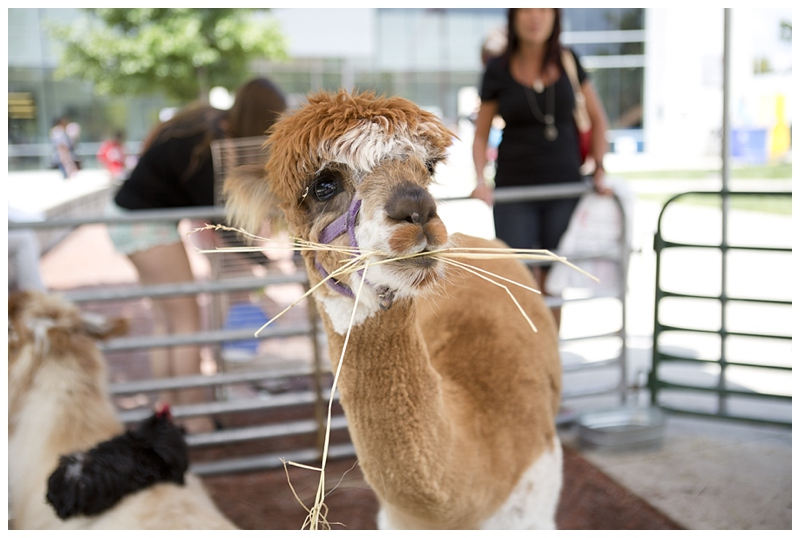 my favorite!!!!!!!!!! I kind of have a not-so-secret obsession with llamas...