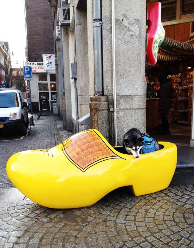 Dog in a clog