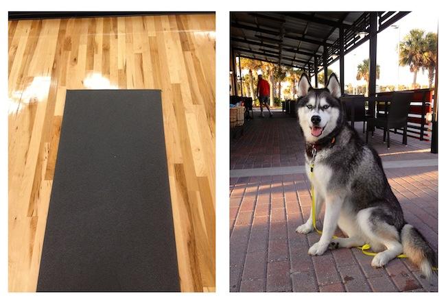 yoga at 5am, dog at starbucks