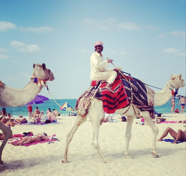 Camels on Jumeirah Beach in Dubai