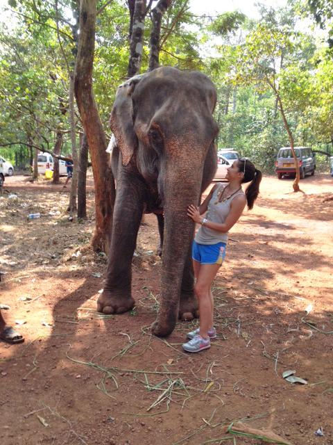 Elephant in Goa