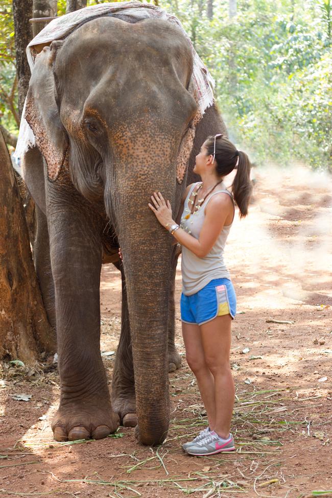 Elephant love in South Goa