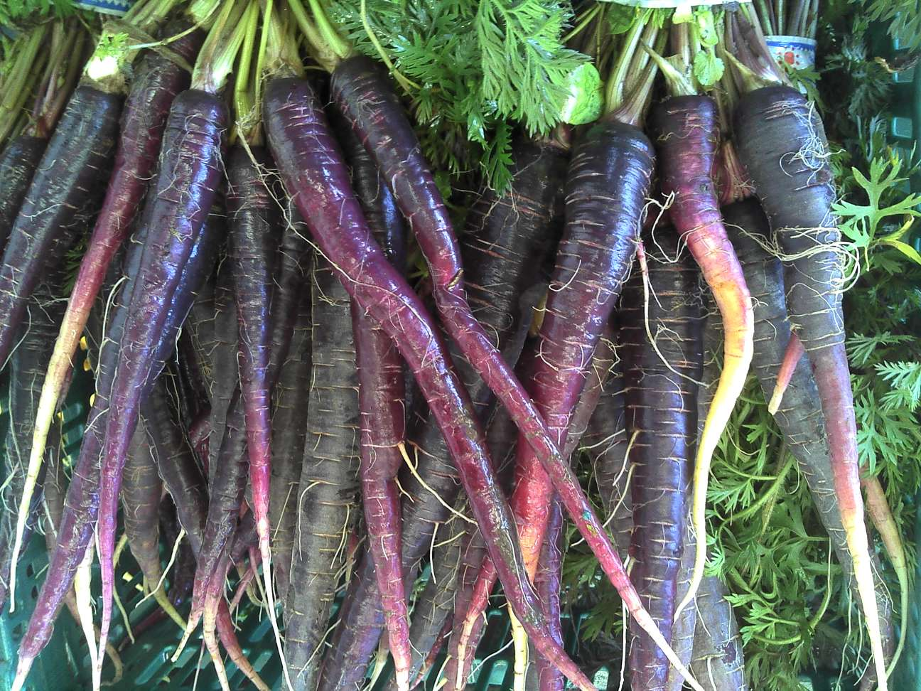 Eastern carrots via  carrot museum