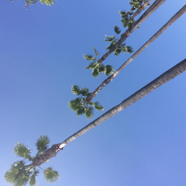 Obligatory Cali palm tree pic