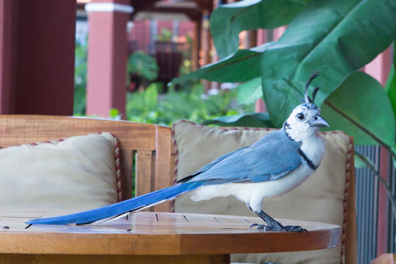 Bird at Reserva Conchal, Costa Rica