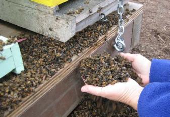save-the-bees-dieoff
