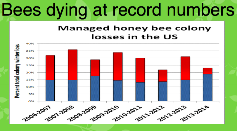 bees-dying-record-numbers