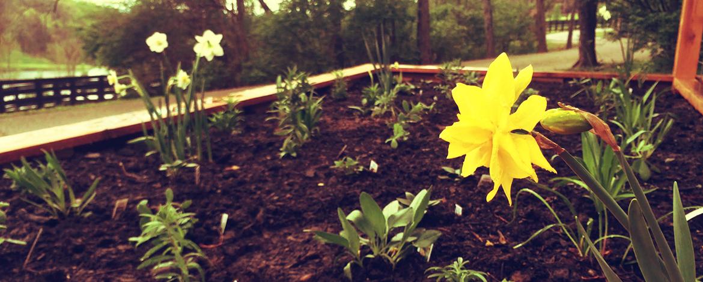 "Williams Honey Farm ""Bloom Box"""