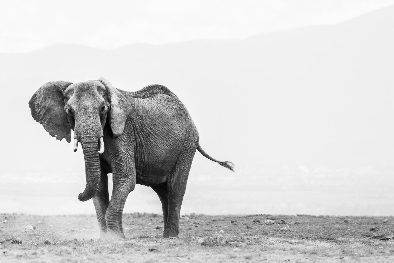 Kenya Safari Yoga Retreat 2019