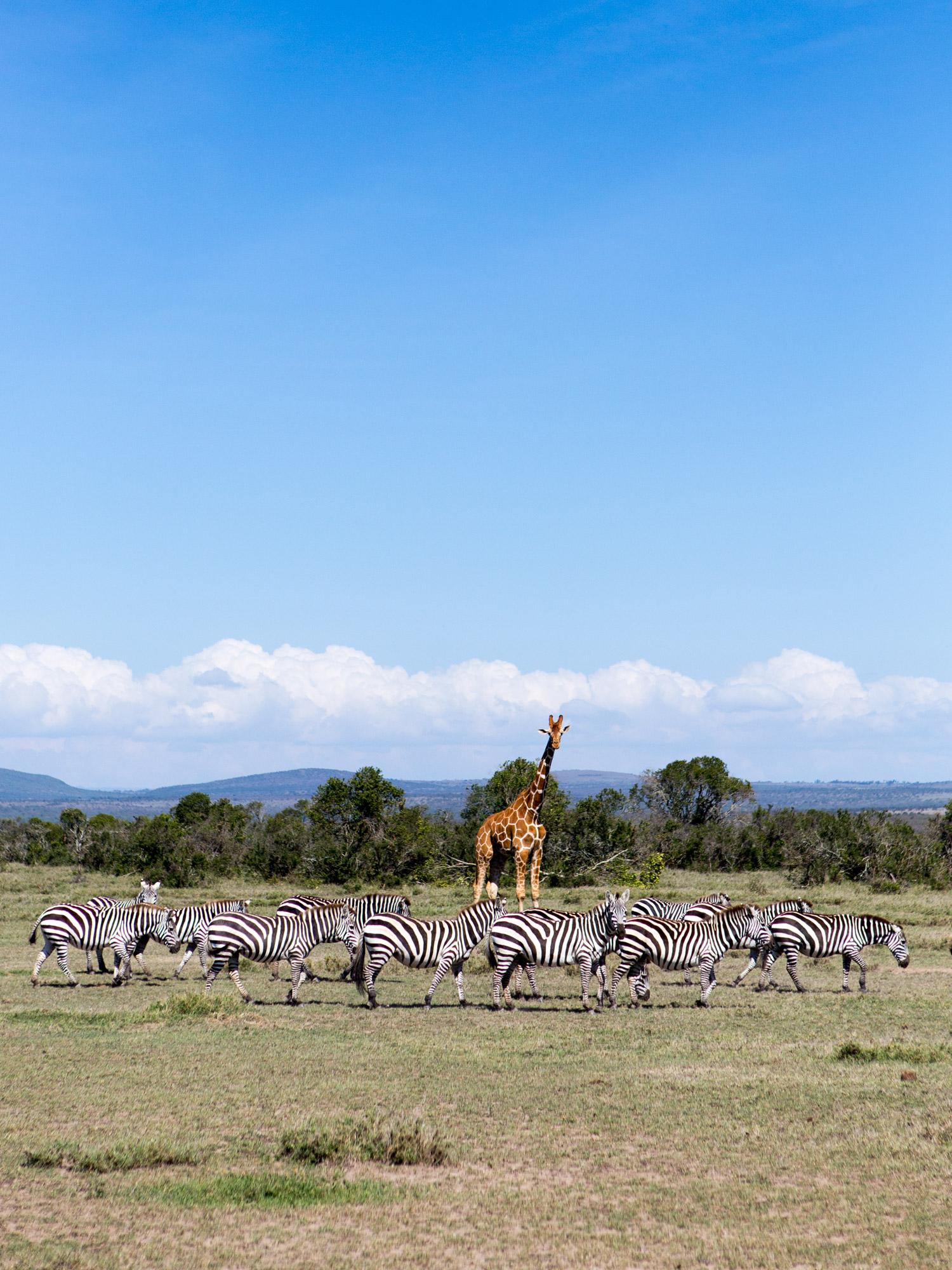 On the plains at our Safari Yoga Retreat