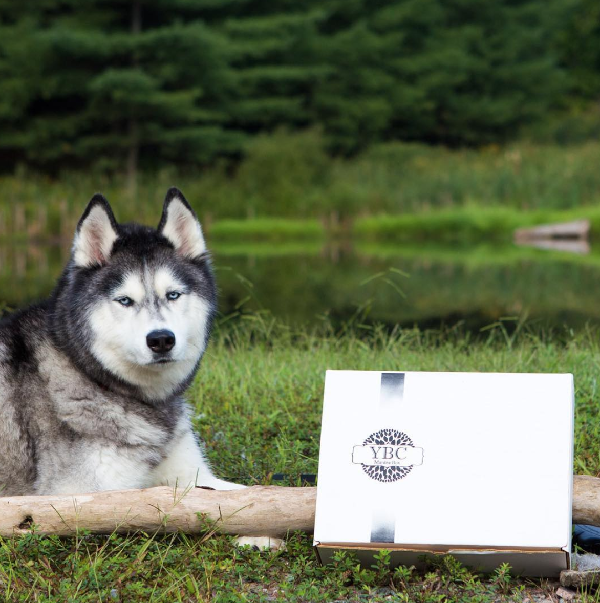 Buckles is ready for his close up with our fall Mantra Box®
