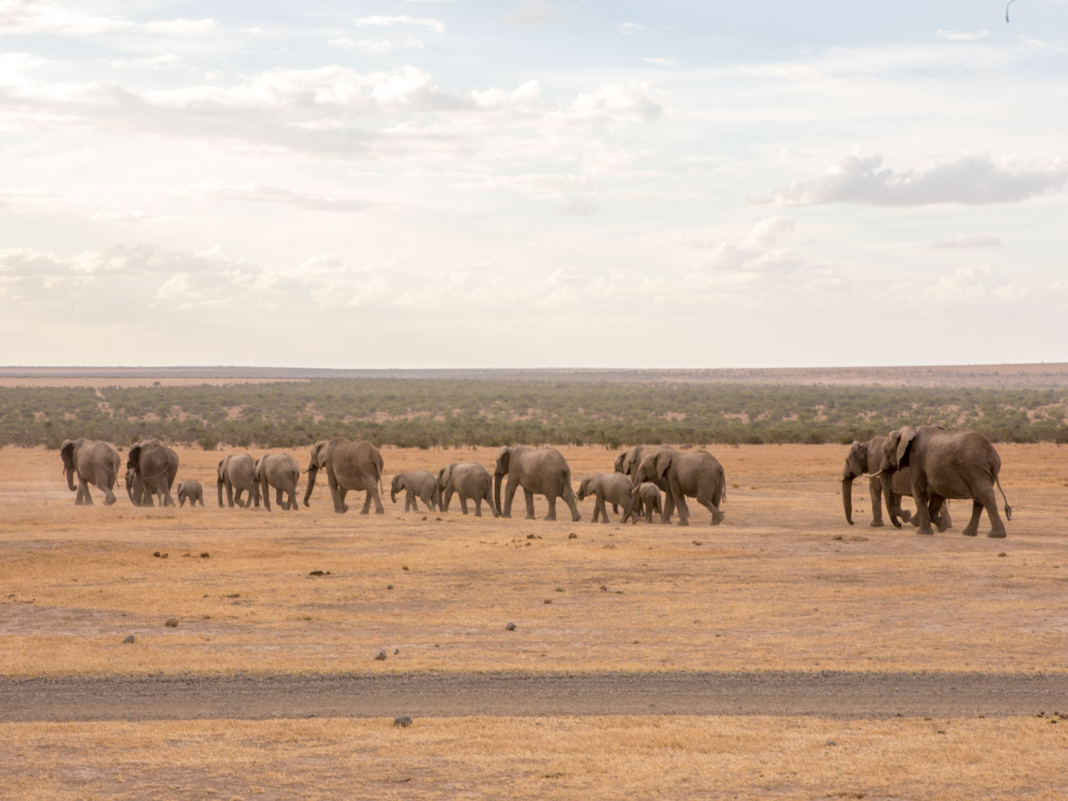 Elephant herd on a walk through the plains