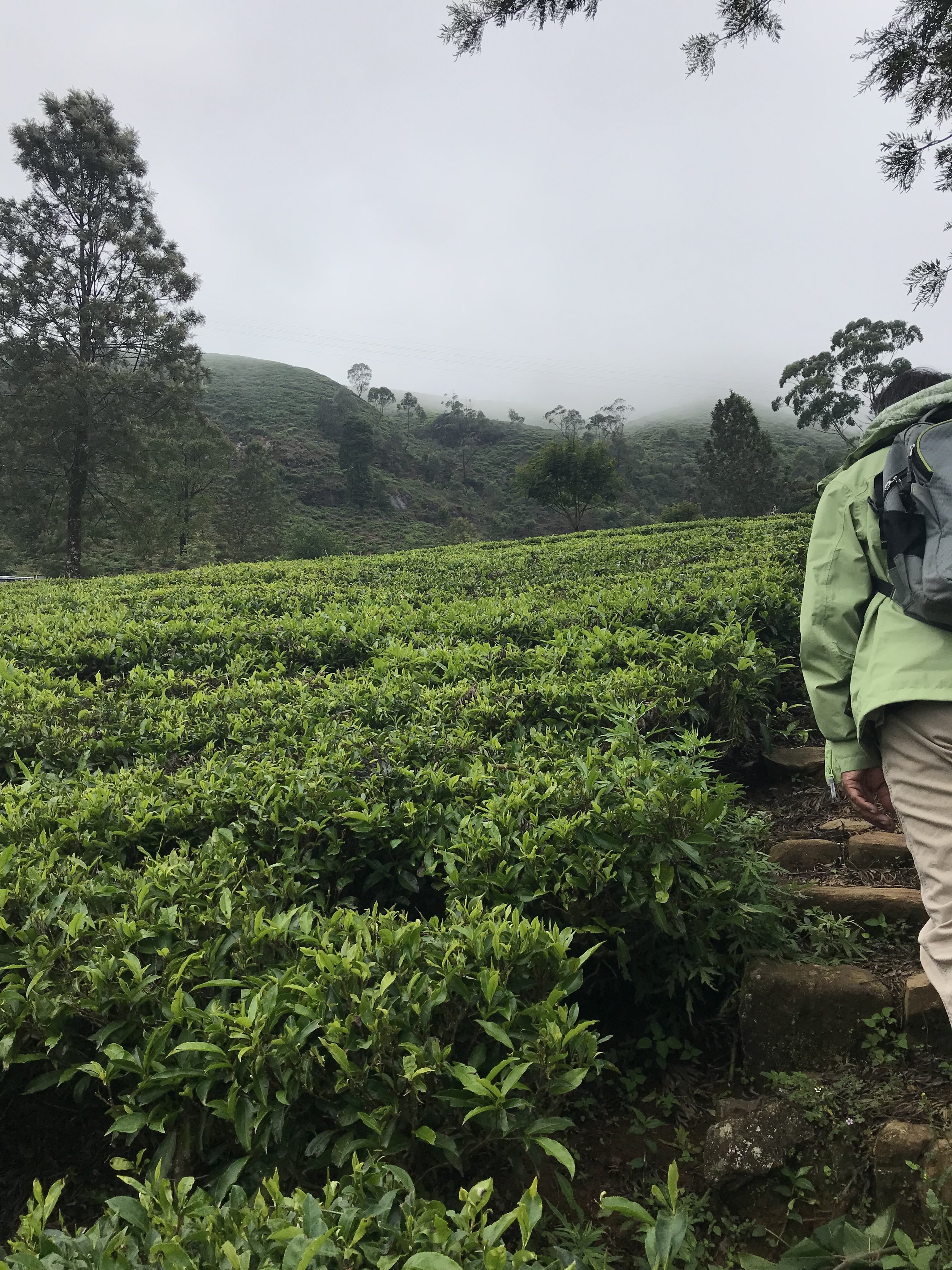 My host in Nuwara Eliya, Lal, was a master naturalist. He took me hiking around town, through the tea fields and rain forests.