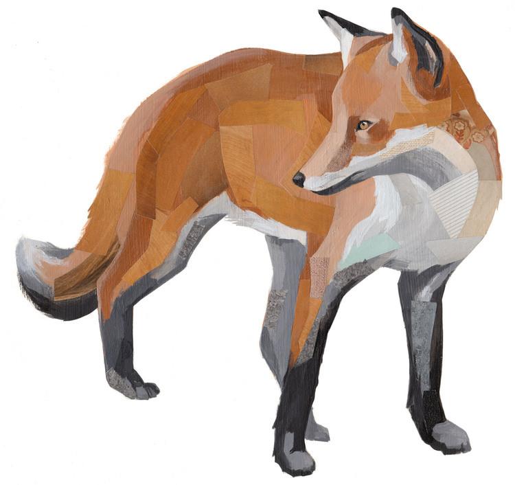fox1200wide.jpg