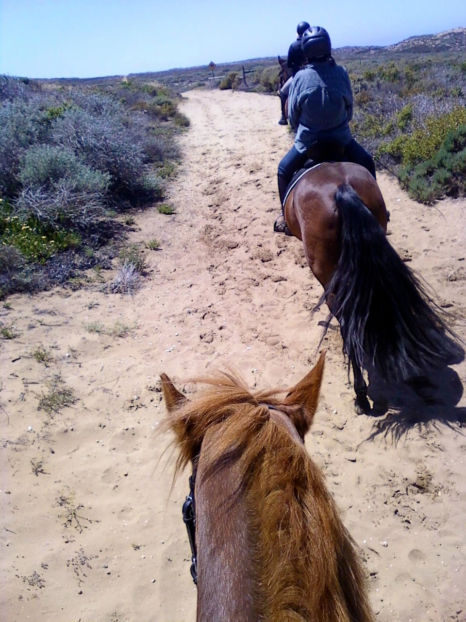 My friend Maria took this one. That's her horse Sullivan at the bottom of the frame. I'm just ahead on the horse with theAMAZING TAIL (sorry).