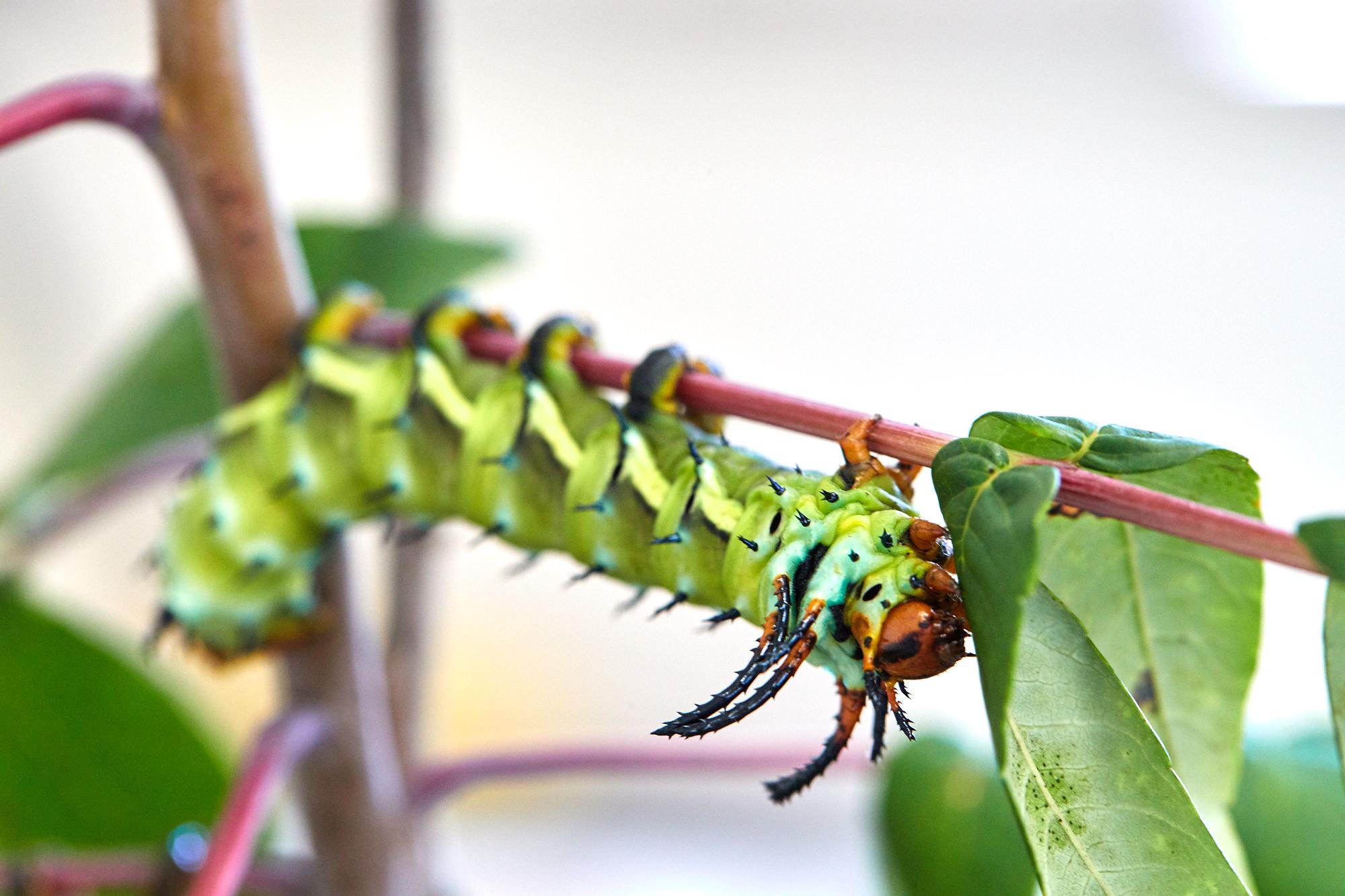 Caterpillars - 2016    - 40278- 000096.jpg