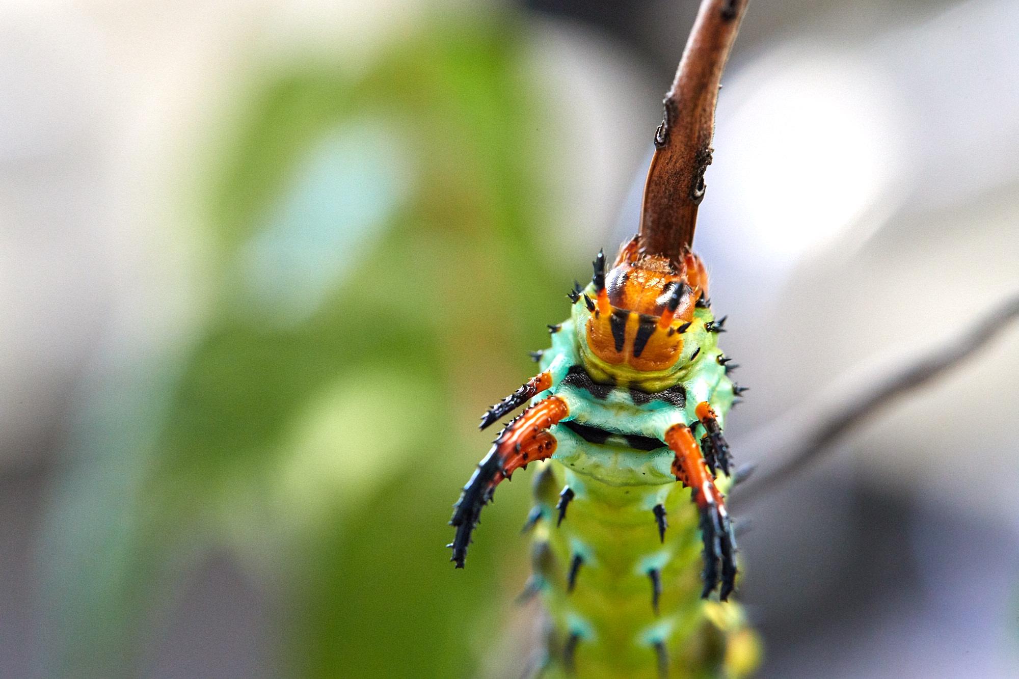 Caterpillars - 2016    - 40279- 000097.jpg