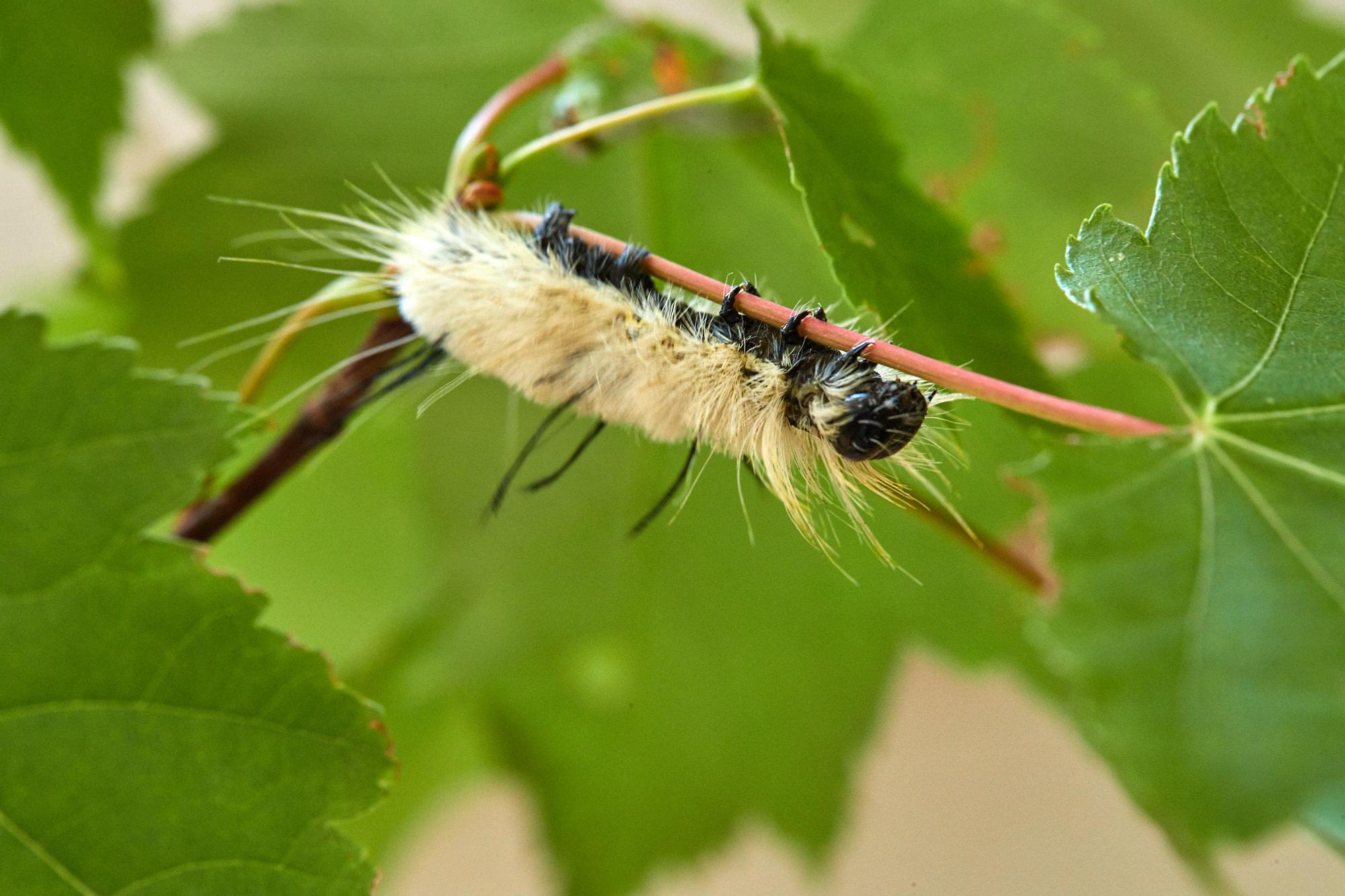 Caterpillars - 2016    - 40288- 000103.jpg