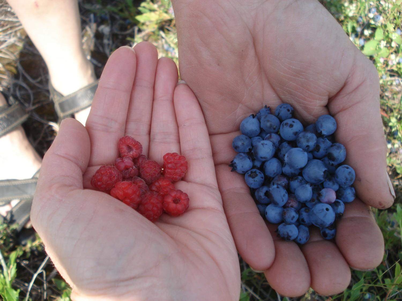 berry hands.JPG