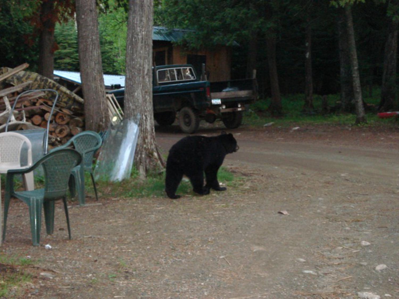 bear 1_1500x1125.jpg
