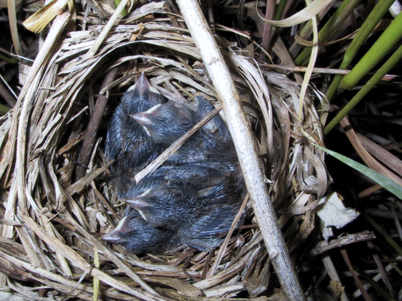 birdbabies 001_1500x1125.jpg