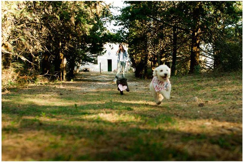sesiones de novios con perros (2).jpg