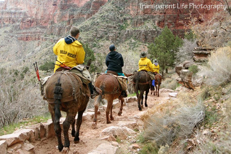 2010 Grand Canyon Trip for facebook 082.jpg