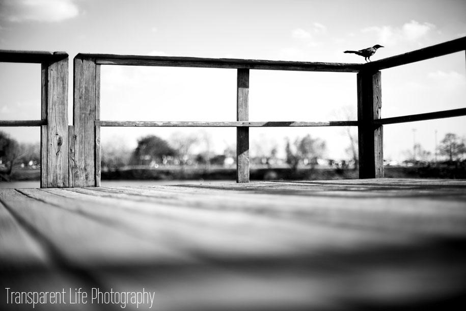 Canon 5D Mark II - Canon 50mm f/1.4 f/1.4 - 1/6400 - ISO 100 Pasadena, TX (Houston area)