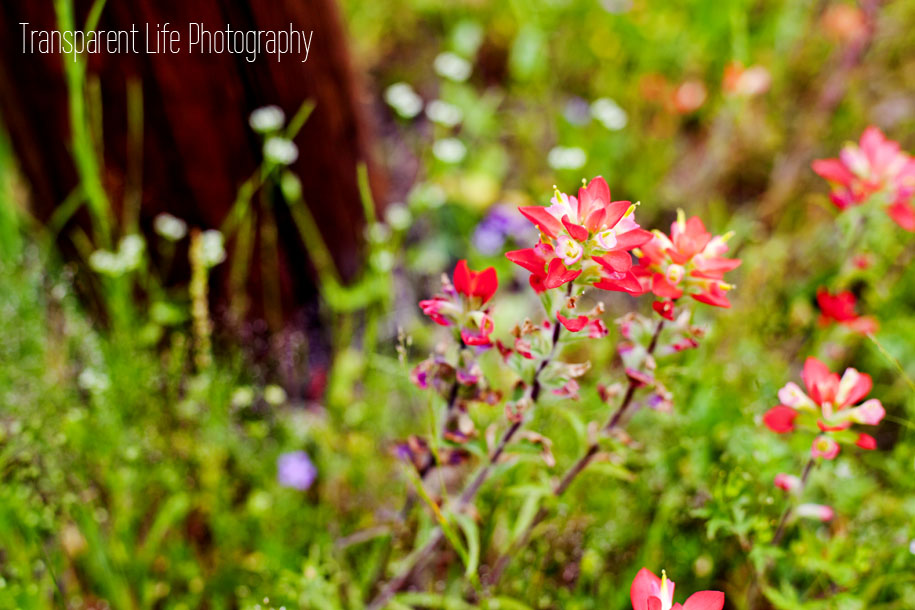 Canon 5D Mark II; 50mm f/1.4 | f/3.2, 1/1000 sec, ISO-250 | Somewhere in Texas :)