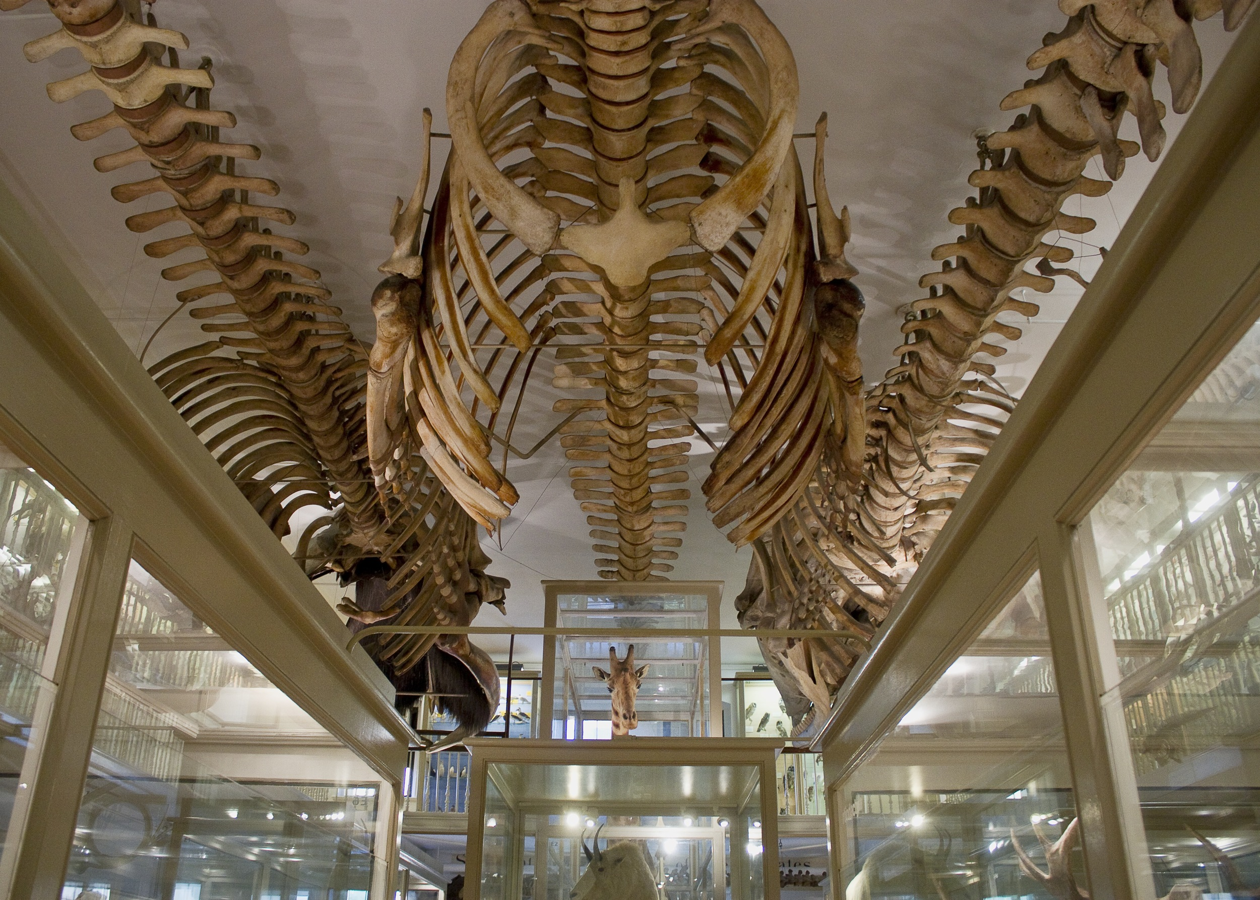 harvard museum of natural history.jpg