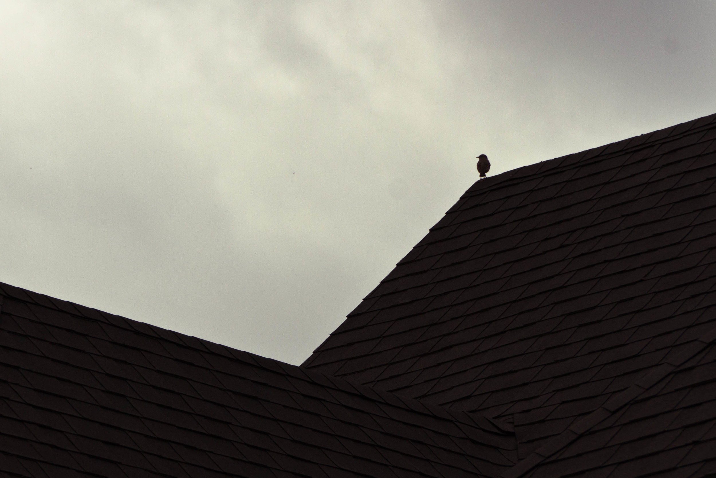 bird on roof.jpg