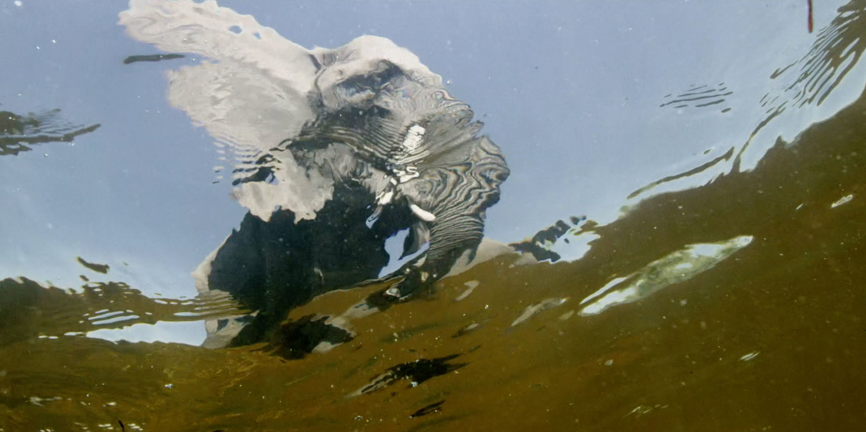 Roger Horrocks 10 Wildlife Cameraman National Geographic.jpg