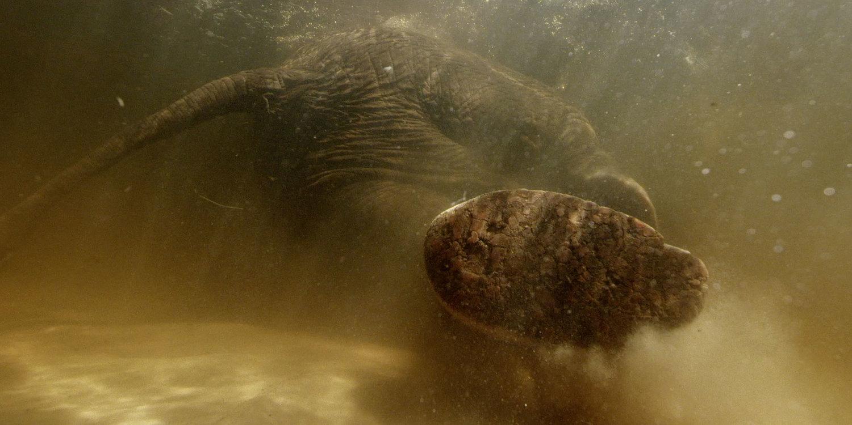 Roger Horrocks 11 Wildlife Cameraman National Geographic.jpg