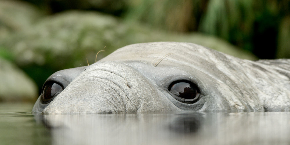 Roger Horrocks 03 Wildlife Cameraman National Geographic.jpg