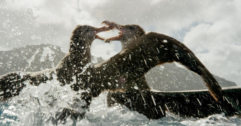 Roger Horrocks 01 Wildlife Cameraman National Geographic.jpg