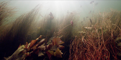 Roger+Horrocks+12+Wildlife+Cameraman+National+Geographic.jpg