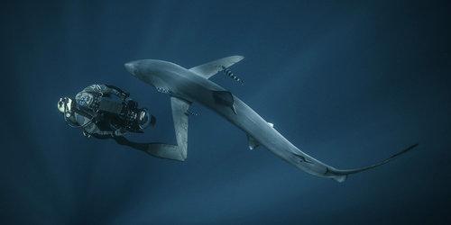 Roger+Horrocks+01+Underwater+Cameraman+BBC+Blue+Planet+2.jpg