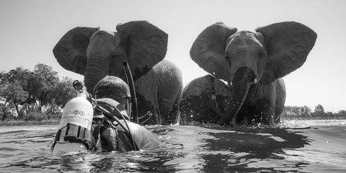 Roger Horrocks Underwater Cameraman Okavango Elephants