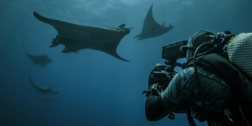 Roger+Horrocks+07+Underwater+Cameraman+BBC+Blue+Planet+2 (1).jpg