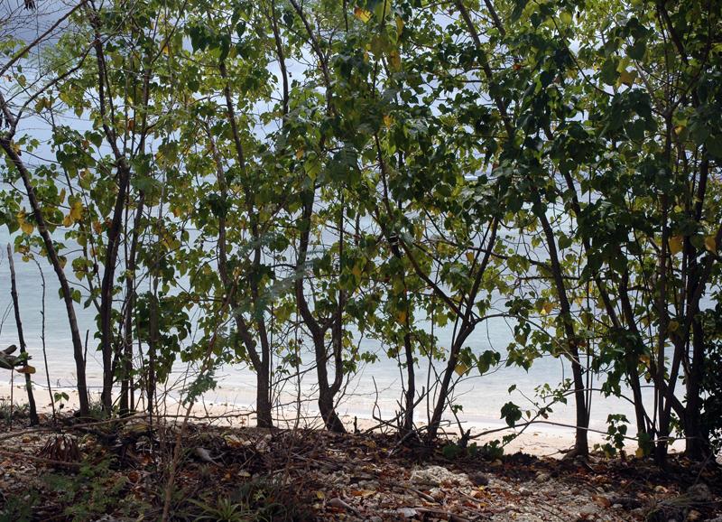 Gwada2010-0374.jpg