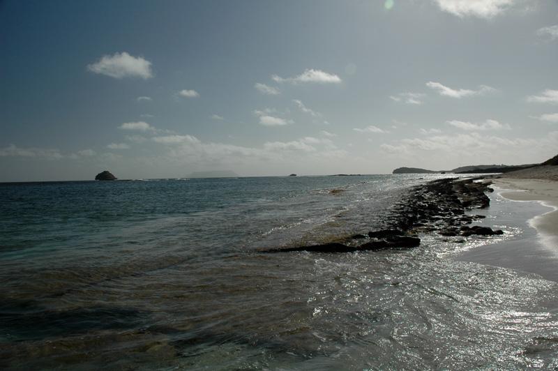 Gwada2010-0536.jpg