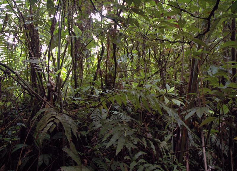 Gwada2010-0874.jpg