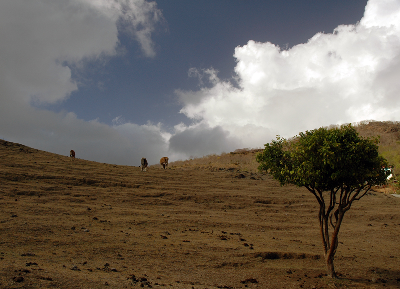Gwada2010-1005.jpg